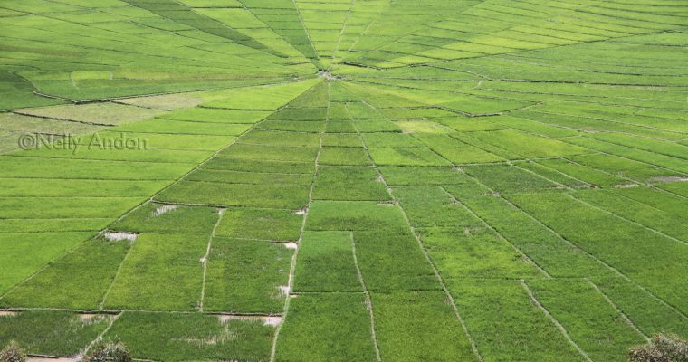 Flores Adventure – Cancar, The Magical Lingko Spiderweb Rice field